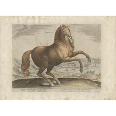 Old master horse portrait from a series of 43 engravings depicting horses of different breeds from the stables of John of Austria son of Emperor Charles V. Appulus depicts an Apulian horse (i. from a region of Italy). Latin Text, Horse Rearing, Pictorial Maps, Horse Portrait, Sports Art, Old Master, Antwerp, Antique Prints, Stables