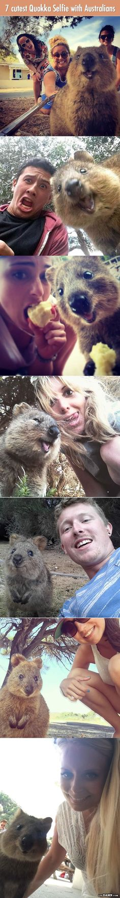 Traveling in Australia? Don't forget to take a cute Quokka selfie. |LOL, Damn! Funny and Awesome pictures. | Visit http://gwyl.io/  for more diy/kids/pets videos