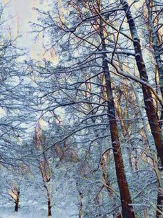Woods in Winter Pinterest Co, Woods, Artsy, Winter, Outdoor, Winter Time, Outdoors, Woodland Forest, Forests