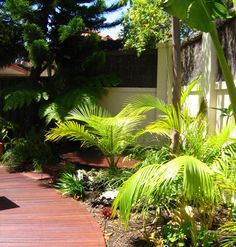 Tropical design with curved deck. Designed by Garden Insight Tropical Design, Tropical Garden, Insight, Deck, Plants, Projects, Log Projects, Tropical Backyard, Decks