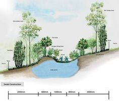 Permaculture swale construction and illustration.