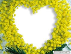 Yellow heart-shaped flowers picture frame template psd | Download ...