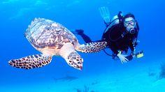 Bahamas Scuba Diving Excursions