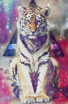 tiger | via Tumblr