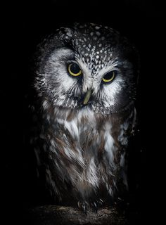 Owl (Explore 29/03/2014) | Flickr - Photo Sharing!