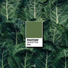 5 Pantone Colours We Wish Actually Existed