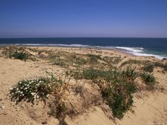 Beach, Cape Trafalgar, Andalucia, Spain