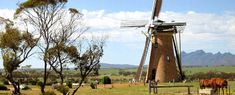 The Lily, Stirling Ranges, Western Australia, Dutch Windmill Cafe Vineyard Accommodation