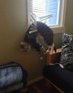 This cat is not at all bothered by his blinds girdle. | There's A Facebook Page About Animals Getting Stuck In Objects And It's Gold