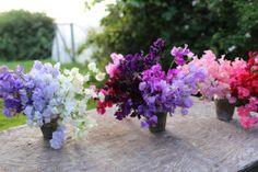 The Seasonal Flower Alliance {June 19} - Floret Flowers