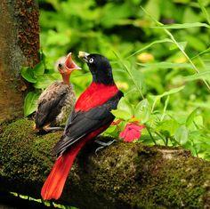 райские птицы - Google'da Ara