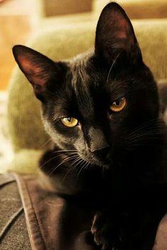 meu gato Júlio ❤