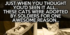 "War cats in hammocks… It should read ""adopted by sailors"" but not everybody knows soldier specifically means Army so I'm just being picky... cool-war-kitties-title-ships"