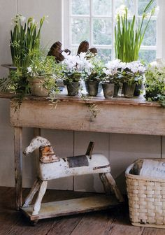 Spring...on the window sill