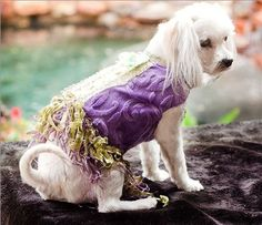 This Lilac Couture dog vest is a Yvette Ruta ($200) creation. Fancy Bed, Puppy Diapers, Dog Vest, Dog Boutique, Puppy Clothes, Collar And Leash, Pet Toys, Cute Dogs, Dogs And Puppies