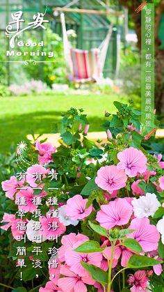 Good Morning, Scenery, Thoughts, Plants, Buen Dia, Bonjour, Landscape, Plant, Paisajes