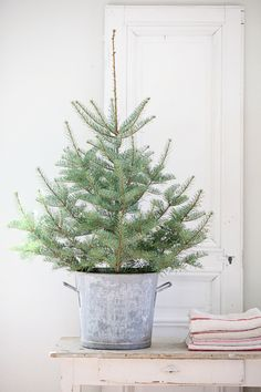 An adorable small tree tucked into a galvanized bucket by Dustjacket Attic ~ very French ~ I love it.