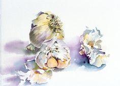 still life garlic 2 watercolour web Garlic Cloves Lucinda Hayes