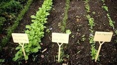 """""""Auf gute Nachbarschaft"""": Mischkulturen im Gemüsebeet. (Quelle: imago/Redeleit)"""