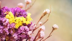 Αποξήρανε το!  #DIY #howto #αποξηραμενα #αποξηραμεναλουλουδια #αποξηρανση #διακόσμηση #καντομονος #κήπος #κηπουρικη #κισσος #κουτσουπια #λεβαντα #λουλουδια #πλατανος #σταχυα
