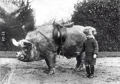 A boy and his gallant riding Boar - 1930s