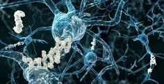 Gene therapy could prevent Alzheimer's, study suggests : medicalnewstoday