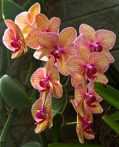 Orchids by Lorraine Hudgins, via 500px