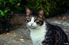 J. Fox waiting. #cat #pet #kitty