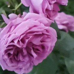 Kweekbal - Snel & Gemakkelijk te stekken – Weldoor Garden Projects, Garden Tools, Air Layering, 3 Branches, Grow Boxes, Mother Plant, Root System, Different Plants, Plant Growth