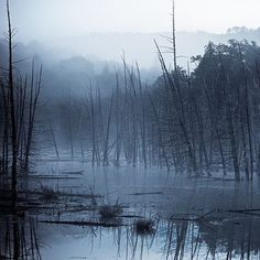 Dead #trees stand still in a flooded #marsh with #fog creeping in #Landscapes #Nature - Dollar Stock Images - http://kozzi.tv/U6VDJ