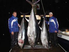 blue fin tuna caught off Ocean Isle