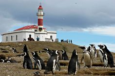 Magdalena Island #Lighthouse, offshore Punta Arenas, #Chile