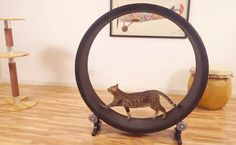 This Exercise Wheel for Felines Makes Use of Their Natural Hunter Instinct #eco #pets trendhunter.com