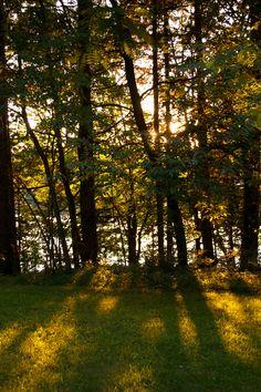 Summer sun through the tress.