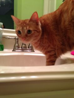 My crazy cat Ollie thinking he we'll get water