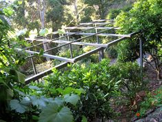 Gardens of steel metal garden pergola for local produces of yarra valley with architectural design concept will out-last any timber pergola.