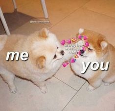 The post appeared first on Wholesome Memes. Cute Cat Memes, Cute Love Memes, Dog Memes, Funny Memes, Baby Animals, Funny Animals, Cute Animals, Memes Amor, Memes Lindos