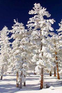 onthe snow