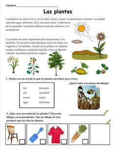 Las plantas (2):