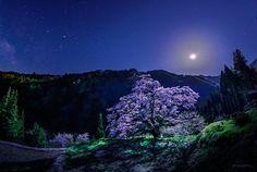 山里に咲き誇る大きな桜の木を、月がやさしく照らしていました。桜が落とす影が長く長く伸びると、月が沈んで天の川も見え始めました。(昨日未明、長野県阿智村にて撮影) pic.twitter.com/320R6HBF3G