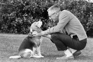 Charles Schulz  Creator of Peanuts  with his dog yep a beagel