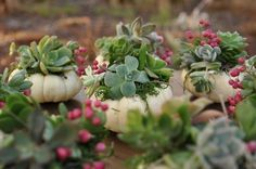 Mini white succulent pumpkin planter gifts by Flower Duet. #FinishWithFlowers