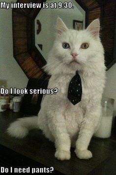 job interview, went well, success, images of | Job Interview Attire for Men