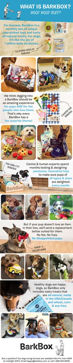 BarkBox is a monthly