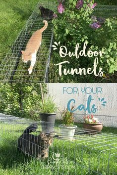 Making outdoor cat tunnels is a great way to increase your cat's territory in a safe and inexpensive way. Read on for step-by-step instructions on how we added outdoor cat tunnels to our existing catio. Outdoor Cat Tunnel, Outdoor Cats, Outdoor Cat Houses, Outdoor Cat Enclosure, Diy Cat Enclosure, Space Cat, Animal Projects, Diy Stuffed Animals, Cat Toys