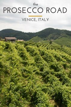Did you know there is a road in Italy that travels through Prosecco vineyards?! It's beautiful, relaxing, and oh yea, the Prosecco is amazing!! | Submerged Oaks