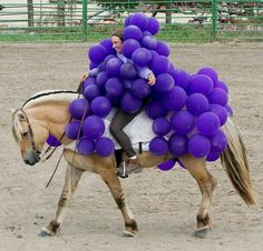 These Hilarious Horse Halloween Costumes Are The Craziest Thing Ever! Horse Halloween Costumes, Pet Costumes, Cool Costumes, Costume Ideas, Animal Costumes, Horse Fancy Dress, Fjord Horse, Usa Holidays, Horse Farms