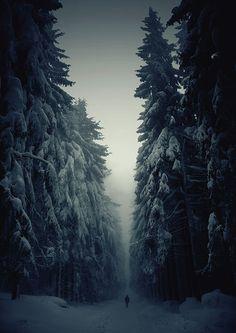 Дорого через зимний еловый лес