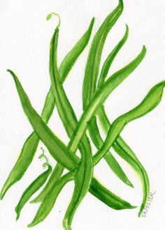Original Green Beans  watercolor painting by SharonFosterArt, $15.00