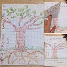 Lapbook sulla pianta e le sue parti. Scuola primaria